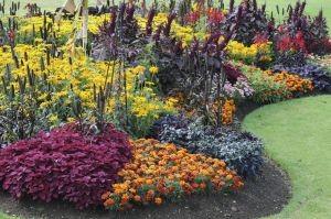 best-displays-bedding-plants