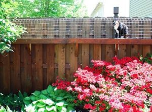 electric fencing can keep your animals in and other residents out the animals learn not to touch and electric fence after one little shock - Garden Ideas To Keep Animals Out