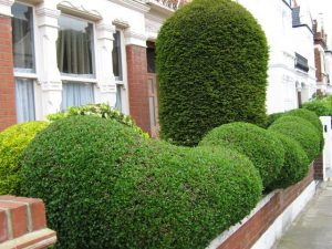 hedge curb