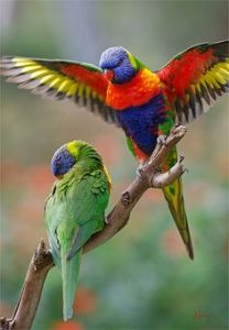 native bird