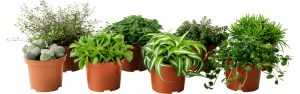 potted-plants-banner