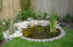 small-garden-pond-design