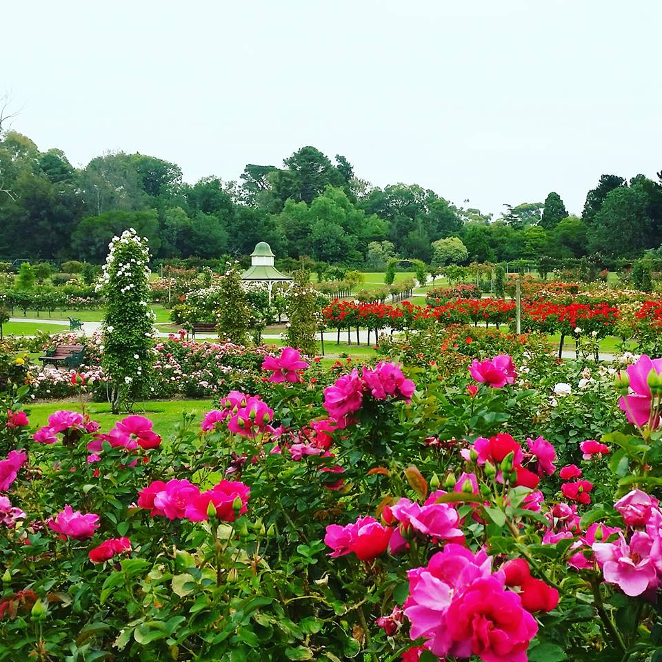 Werribee's Rose Garden