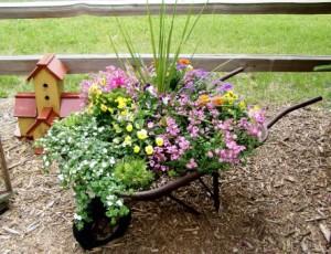 Wheelbarrow Planted with Flowers